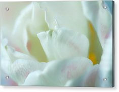 Acrylic Print featuring the photograph Tulip by Jonathan Nguyen