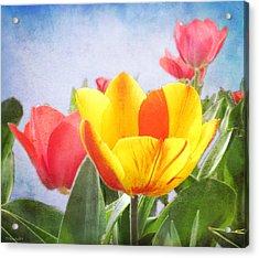 Tulip Joy Acrylic Print by Deborah Smith