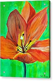 Tulip Acrylic Print by Kat Poon