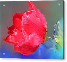 Tulip Acrylic Print by Kume Bryant