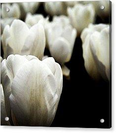 #tulip #lale #çiçek Acrylic Print