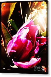 Acrylic Print featuring the photograph Tulip by Leslie Hunziker