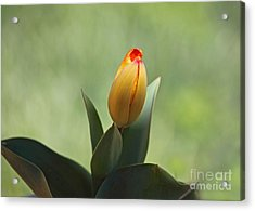 Acrylic Print featuring the photograph New Beginning by Lisa L Silva