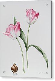 Tulip Meissner Porcellan With Bulb  Acrylic Print by Sally Crosthwaite