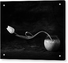 Tulip No. 3 Acrylic Print
