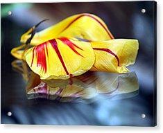 Tulip Reassembled 4 Acrylic Print