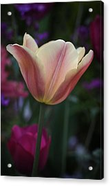 Tulip Study No. 4 Acrylic Print