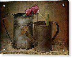 Tulip Tales Acrylic Print