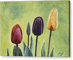 Tulip Trio Acrylic Print by Crista Forest