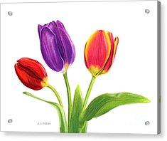 Tulip Trio Acrylic Print by Sarah Batalka