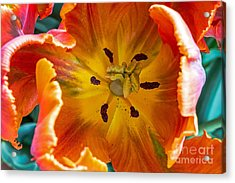Acrylic Print featuring the photograph Tulip Two by Kate Brown