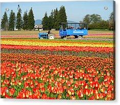 Tulip Wagon Acrylic Print