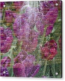 Tulip Waterfalls Acrylic Print by Penny Lisowski