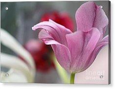 Tulip Whimsey Acrylic Print by Jennifer Apffel
