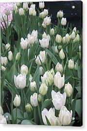Acrylic Print featuring the photograph Tulip White Show Flower Butterfly Garden by Navin Joshi