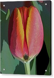 Tulip1 Acrylic Print by Valerie Timmons