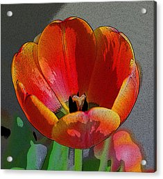 Tulip2 Acrylic Print by Valerie Timmons