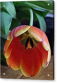 Tulip3 Acrylic Print by Valerie Timmons