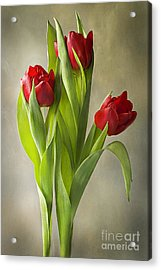 Tulipa Acrylic Print by Jacky Parker