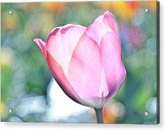 Tulipooty Acrylic Print