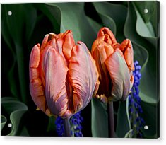 Irene Parrot Tulips Acrylic Print