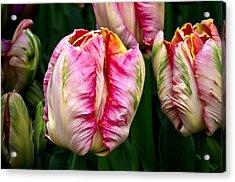 Tulips 02 Acrylic Print