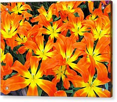 Acrylic Print featuring the photograph Tulips 1 by Gerry Bates