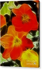 Tulips-6681-fractal Acrylic Print by Gary Gingrich Galleries