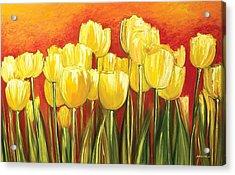 Tulips Acrylic Print by Ahmed Amir