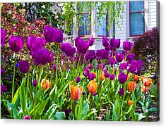 Tulips And Bush House Acrylic Print