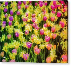 Tulips And Daffodils Acrylic Print by Jill Balsam