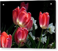 Acrylic Print featuring the photograph Tulips And Daffodils by Lucinda Walter
