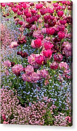 Tulips And Forget-me-nots Acrylic Print by Frank Townsley