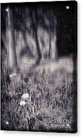 Tulips And Tree Shadow Acrylic Print by Silvia Ganora