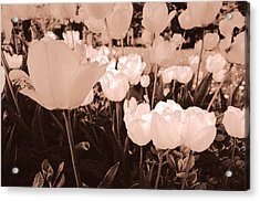 Acrylic Print featuring the photograph Tulips by Arkady Kunysz