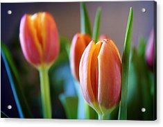 Tulips Artistry Acrylic Print