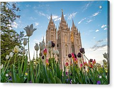 Tulips At The Temple Acrylic Print