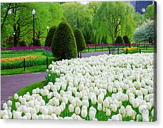 Tulips Boston Public Gardens  Acrylic Print by Michael Hubley