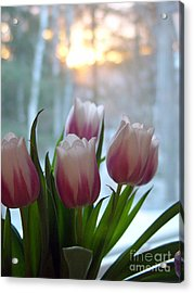 Acrylic Print featuring the photograph Tulips by Christopher Mace