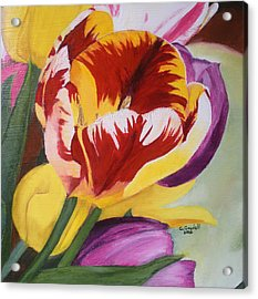 Tulips Acrylic Print by Claudia Goodell