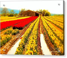 Tulips Field In Provence By A Farm Stone House France Acrylic Print by Flow Fitzgerald