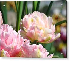 Tulips Flowers Garden Art Prints Pink Tulip Floral Acrylic Print by Baslee Troutman