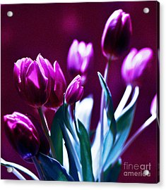Acrylic Print featuring the photograph Purple Tulips by Silva Wischeropp