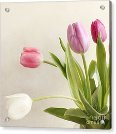 Tulips Acrylic Print by LHJB Photography
