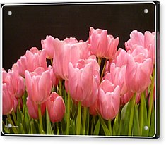 Tulips In Bloom Acrylic Print