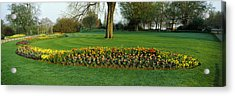 Tulips In Hyde Park, City Acrylic Print by Panoramic Images