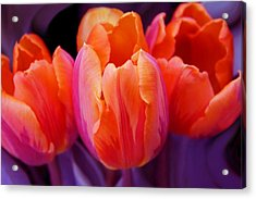 Tulips In Orange And Purple Acrylic Print by Jennie Marie Schell