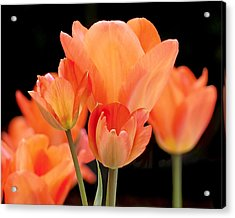 Tulips In Shades Of Orange Acrylic Print by Rona Black