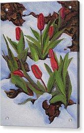 Tulips In Snow Acrylic Print