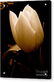 Acrylic Print featuring the photograph Tulips In Study 1 by Cathy Dee Janes